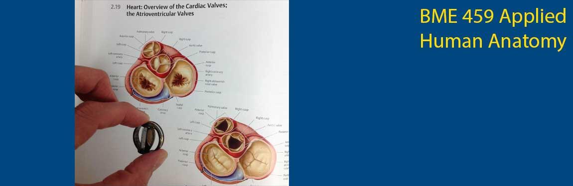 Bme 459 Applied Human Anatomy